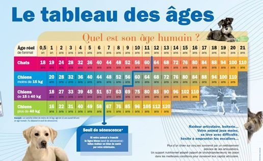 Age humain de son chat