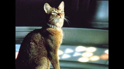 chat qui vient de l'espace disney