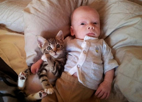 Top 7 des meilleurs chats baby-sitters   Animal Blog