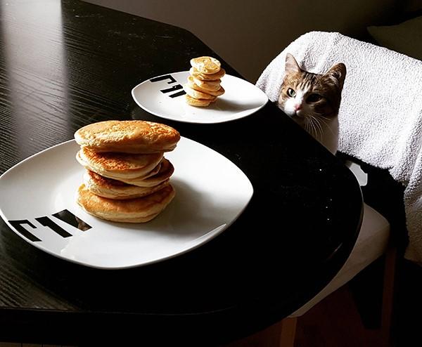 funny-girl-cat-breakfast-table
