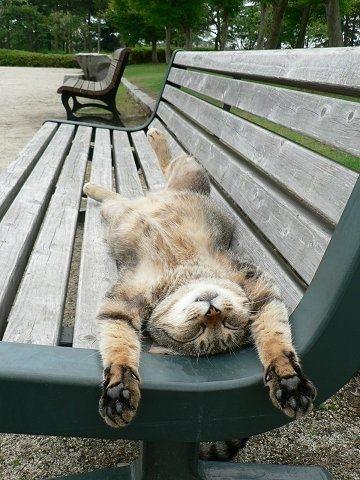 chat soleil banc