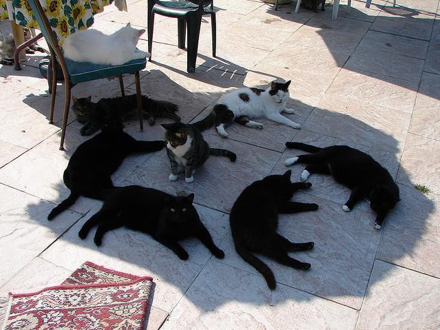 chat-soleil