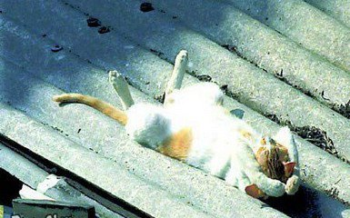 chat soleil2