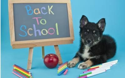 Comment préparer la rentrée de votre chien ?