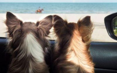Apaiser le stress de votre animal durant les longs trajets