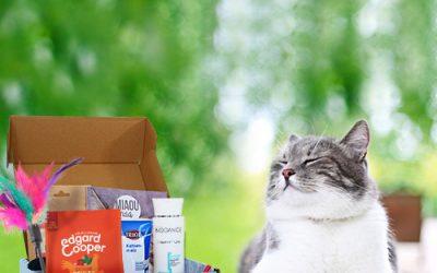 Comment rendre heureux votre chat ?