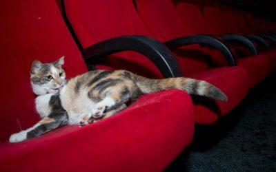 Les chats au cinéma : ils envahissent le grand écran !