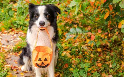 Comment fabriquer des friandises pour chien pour Halloween